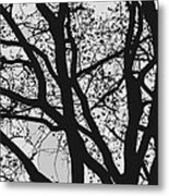 Tilia Night Silhouette Metal Print