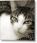 Tilly Little Miss Attitude Metal Print