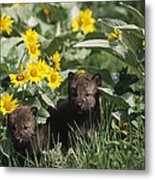 Timber Wolf Pups And Flowers North Metal Print