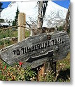 Timberline Trail Metal Print