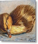 Time For A Nap Metal Print