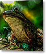 Time Spent With The Frog Metal Print