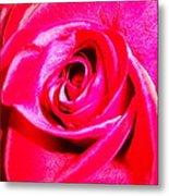 Timeless Red Rose Metal Print