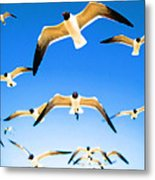 Timeless Seagulls Metal Print