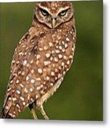 Tiny Burrowing Owl Metal Print