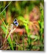Tiny Butterfly Metal Print