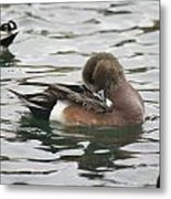 Tiny Duck Cleaning 4   # Metal Print
