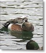 Tiny Duck Cleaning 1 Metal Print