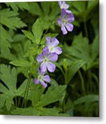 Tiny Flowers In The Forest Metal Print