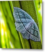 Tiny Moth On A Blade Of Grass Metal Print