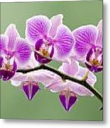 Tiny Orchid Faces Metal Print