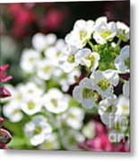 Tiny Pink And Tiny White Flowers 2 Metal Print