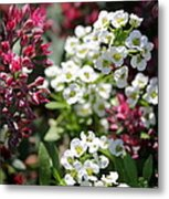 Tiny Pink And Tiny White Flowers Metal Print