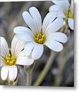 Tiny White Flowers #1 Metal Print