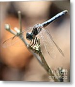 Tired Dragonfly Square Metal Print