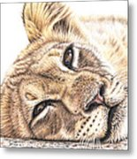 Tired Young Lion Metal Print