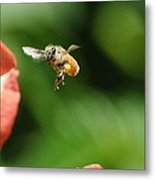 To Bee Or Not Metal Print