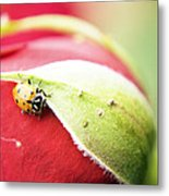 To Live Upon Such Colored Satin Metal Print