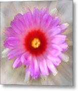 To Return To Innocence. Cactus Flower Metal Print by Jenny Rainbow