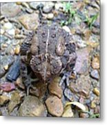 Toad Of Toad Hall Metal Print