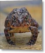 Toad With An Attitude Metal Print