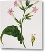 Tobacco Flowers Metal Print