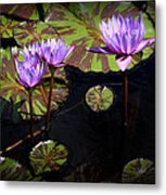 Together And Alone Metal Print