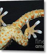 Tokay Gecko Feet Metal Print
