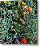 Tomato Garden. Metal Print