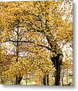 Tombs Under Oaktree Metal Print