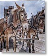 Tombstone Mules Metal Print