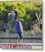 Tomoka Marsh Little Blue Heron Metal Print