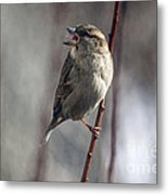 Tongue Of The Sparrow Metal Print