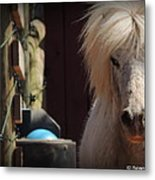 Tonkas Bad Hair Day Metal Print