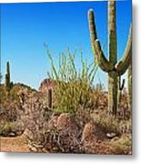 Tonto National Forest Cactus Metal Print