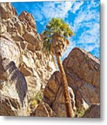 Top Of A Palm Near Top Of Andreas Canyon-ca Metal Print