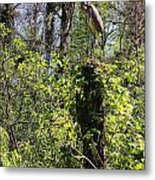Top Of The Glades Metal Print