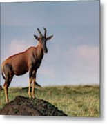 Topi Standing Guard On Termite Mound Metal Print