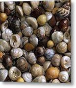 Topshells Whelk And Periwinkle Shells Metal Print