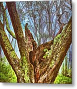 Torn By Time II Metal Print