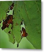 Torn Leaf Abstract Metal Print