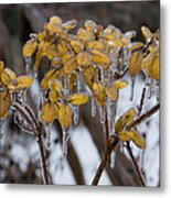 Toronto Ice Storm 2013 - My Garden In The Morning Metal Print