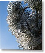 Toronto Ice Storm 2013 - Pine Needle Flowers In The Sky Metal Print