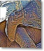 Tortoise One Metal Print