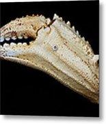 Toucan Crab Claw Metal Print