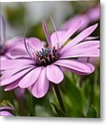 Touch Of Elegance Metal Print
