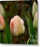 Touch Of Peach Metal Print