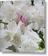 Touch Of Pink Metal Print