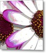 Touch Of Pink Osteospermum Trio B Metal Print