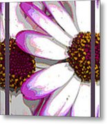 Touch Of Pink Osteospermum Trio Sample Metal Print